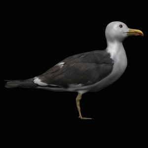 fully rigged seagull 3D model