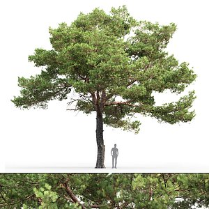 3D tree sylvestris 20