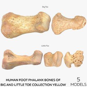 Human Foot Phalanx Bones of Big and Little Toe Collection Yellow - 5 models 3D model