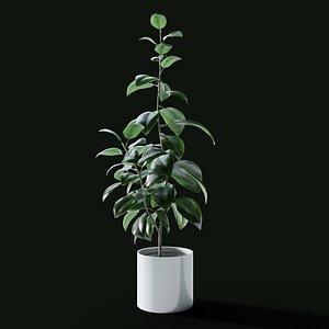 3D Ficus Elastica model