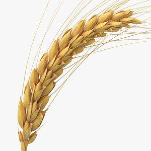 3D wheat branch 01