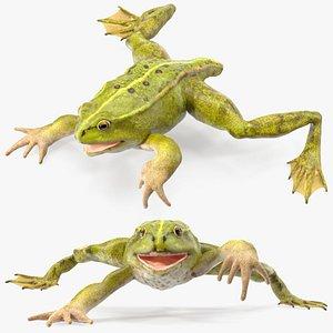 3D Froglet model