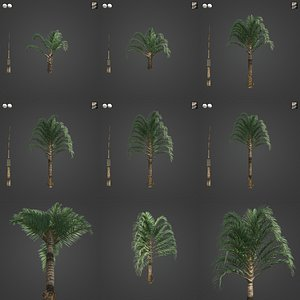 2021 PBR Triangle Palm Collection - Neodypsis Decaryi 3D model