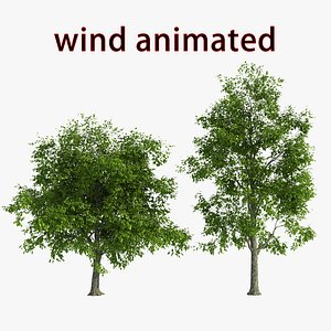 3D wind tree model