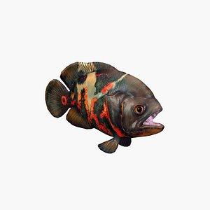3D Oscar Fish