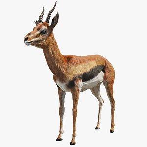 gazelle mammal wildlife 3D model