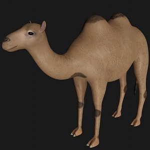 3D fully rigged camel