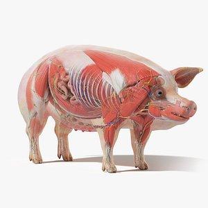 3D model Full Pig Anatomy Static
