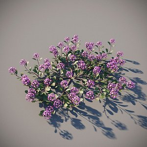 XfrogPlants Desert Sand Verbena - Abronia Villosa 3D