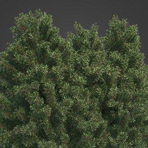 3D 2021 PBR Common Juniper - Juniperus Communis