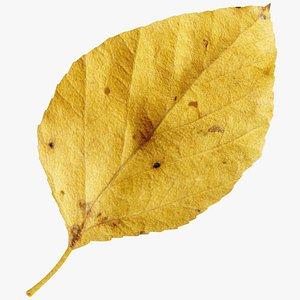3D Birch Leaf V2 model