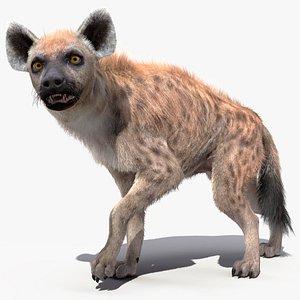 3D fur rigged hyena model