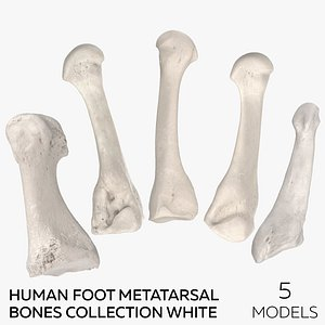 Human Foot Metatarsal Bones Collection White - 5 models 3D model