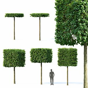 trees europaea pallida 3D model