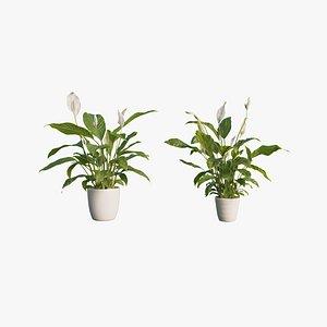 3D model peace lily pot