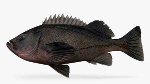 dark rockfish fish 3D model