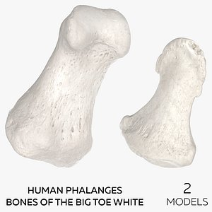 Human Phalanges Bones of the Big Toe White - 2 models model
