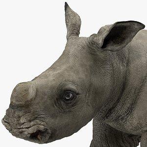 baby rhino rigged 3D model