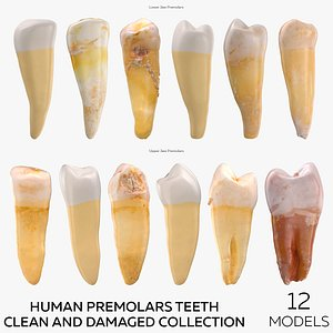 Human Premolars Teeth Clean and Damaged Collection - 12 models 3D model
