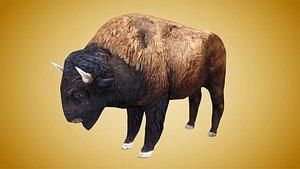 bison buffalo model