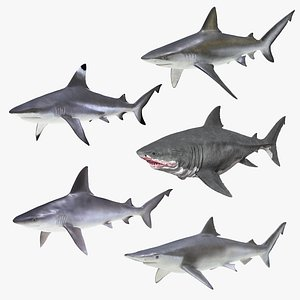 3D Sharks Collection 11