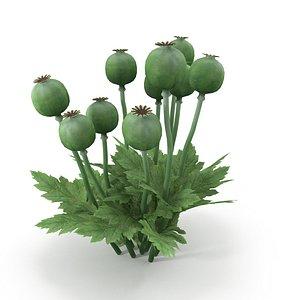 Poppy bush 3D model