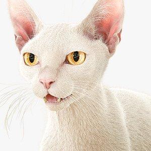 Cat White Fur Shorthair XGen Core 3D