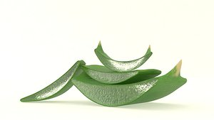 3D aloe plant vera
