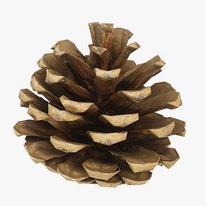 Fir Cone 7 3D model