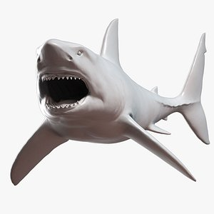 great white shark attack 3D model