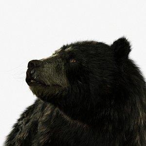 3D bear black RIGGED