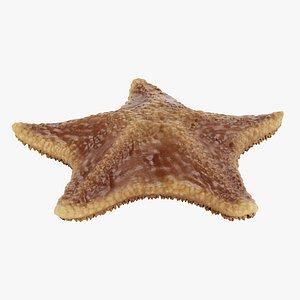 3D bat starfish rigged