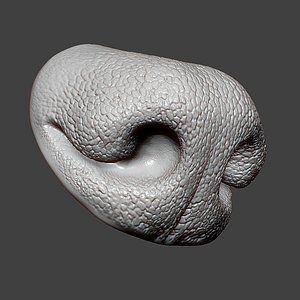 Dog Nose ZBrush Sculpt 3D model