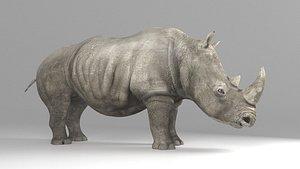 3D African rhino