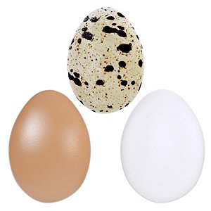Egg collection 3D model