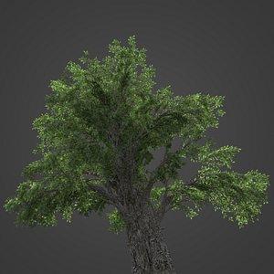 2021 PBR Temple Juniper Collection - Juniperus Rigida 3D model
