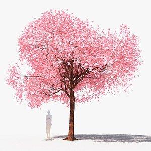 Collection of 5 cherry trees prunus avium 3D model