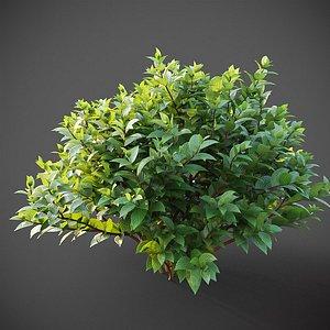 3D XfrogPlants Common Dogwood - Cornus Sanguinea