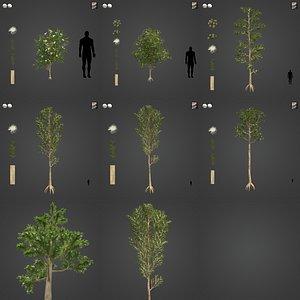3D 2021 PBR Karri Collection - Eucalyptus Diversicolor