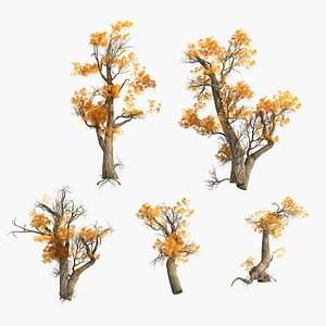populus euphratica 3D model