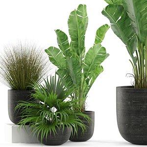 Plants collection 455 3D model