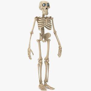 Cartoon Skeleton model