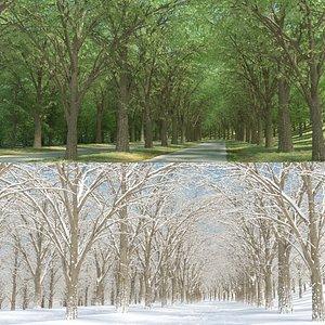3D model summer elm tree