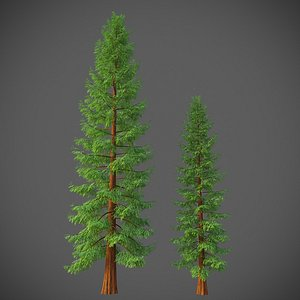 XfrogPlants California Redwood - Sequoia Sempervirens 3D model