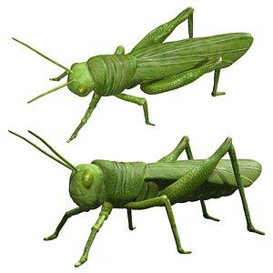3D Rigged Green Grasshopper