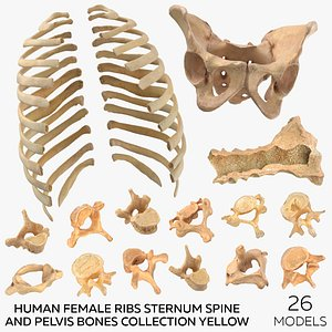 3D Human Female Ribs Sternum Spine and Pelvis Bones Collection Yellow - 26 models