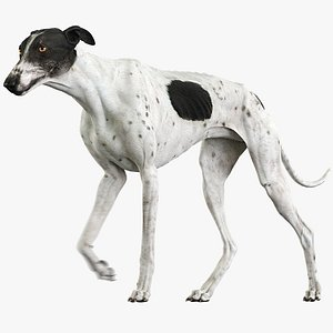 3D model realistic greyhound animations