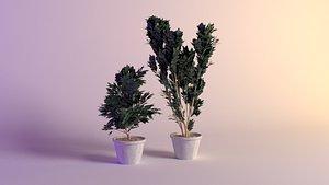cerasus etna 3D model