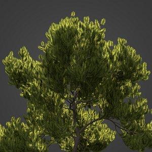 3D 2021 PBR Mugo Pine Collection - Pinus Mugo