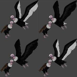 realistic vulture condor 3D model